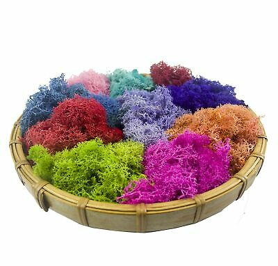 Bister 6.5oz Reindeer Moss Preserved 5 Assorted Colors for Fairy Gardens, Gif...