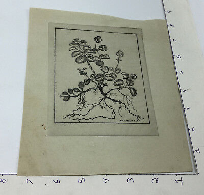 Vintage early Etching -- CARO WEIR ELY -- PLANT w watermark on paper 1900's #1