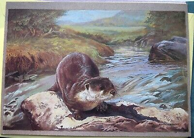 NATURA DESIGNS OTTER BY SPENCER ROBERTS DRAWING BIRTHDAY GREETINGS CARD 1980s.