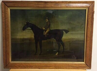 """Framed Antique English Print Features """"Warter"""" Horse And Rider"""