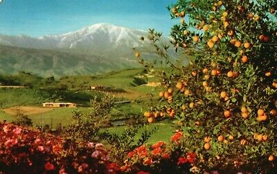 Brilliant Flowers,Orange Tree & Snow-capped Mt. In Southern Calif Postcard A48