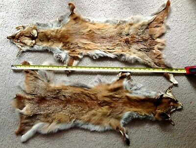 Fox Fur Skins X 2, cleaned and tanned, Free Postage