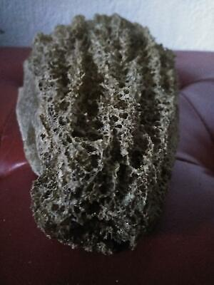 Unique Large Sea Sponge Unbleached All Natural From The Ocean