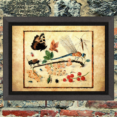 Entomology Dragonfly Insects Art Print Antique Effect Paper Buy 2 Get 1 Free