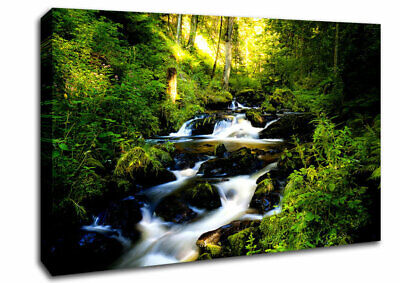Black Forest In Germany Lake 06244 Canvas Print Wall Art