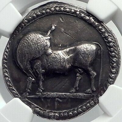SYBARIS LUCANIA Authentic ARCHAIC 550BC Silver Greek Stater Coin BULL NGC i82362