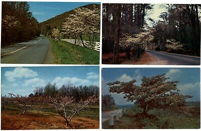 LOT OF 4 ~ Tree blossoms in southern states ~ flowers ~ vintage postcard