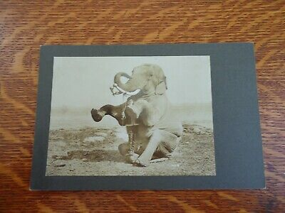 Antique Cabinet Card Photo - ELEPHANT & TRAINER - CIRCUS PERFORMER ELEPHANT?
