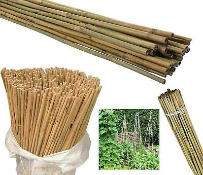 2ft - 8ft Bamboo Canes Strong Heavy Duty Professional Garden Plant Support Pole