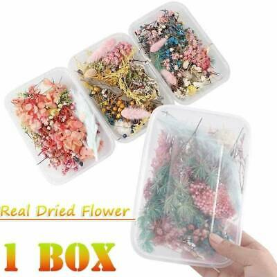Assroetd Real Dried Flowers Pressed Leaves for Epoxy Resin Jewelry Making 1 Box