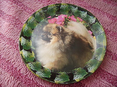 Pomeranian  On A Decoupage  Plate