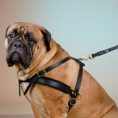 Strong Handmade Bullmastiff Real Leather Weight Dog Pulling Harness Soft Padded