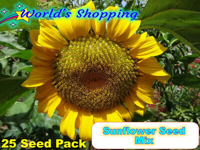 25x Sunflower Seeds Mix - High Germination Rate - UK Acclimatised
