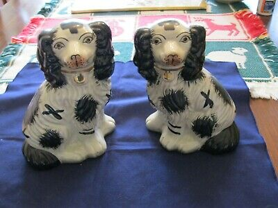 Pair of Black and White Dogs