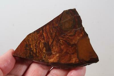 Biggs Scenic type Jasper lapidary rough 3.3 oz  .99¢ start