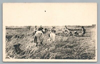 Southeast Asian Farmers RPPC Rice—Antique Photo—Philippines? Agriculture 1910s