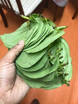 PAAN 25 LEAFS FRESH 100% PURE BANGLA DISPATCH SAME DAY WITH 1st CLASS ROYAL MAIL