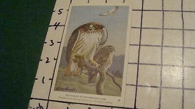 Vintage Audubon Bird Card by ALLAN BROOKS -- #9 RED-TAILED HAWK -- 1940's