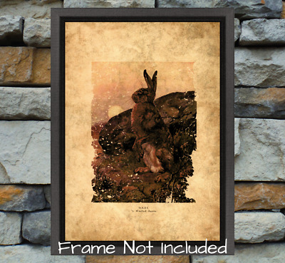 Wild Beasts of the world Hare Print Choice Of 3 Mediums New Historic Ancient Art