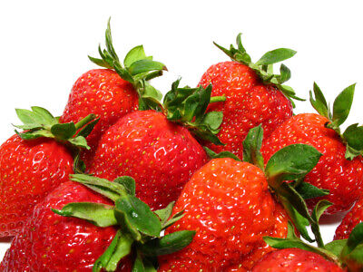 10 Benton Strawberry Plants - Certified Bare Root - Free Priority Shipping