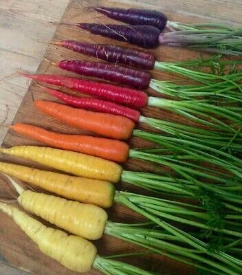 50 Rainbow Carrot Seeds