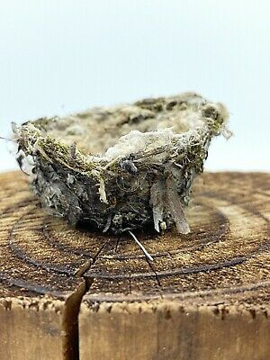Authentic Real Hummingbird Nest From Northern California