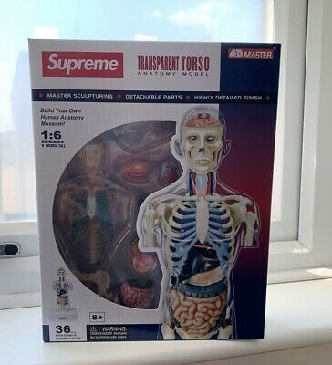 Supreme Male Anatomy Model - FW18 Accessories - Model Figure Display