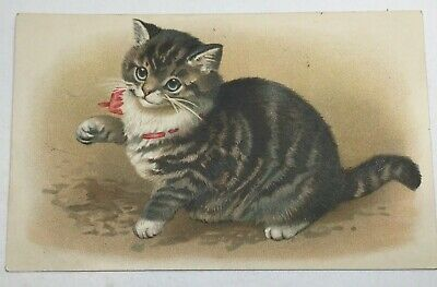 Vintage Cat Postcard, Red Ribbon On Neck, Embossed Germany, By Mab, Posted 1910