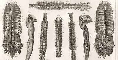 NEW Fine Art Giclee Print 1850 Anatomy of Human Ligaments /& Muscles #2 JG Heck