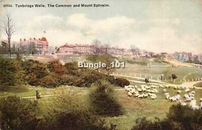 [51171] Tunbridge Wells Kent early postcard c.1906