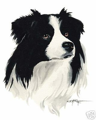 BORDER COLLIE Dog Painting ART 11 X 14 LARGE Signed DJR