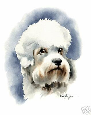 DANDIE DINMONT Painting Dog ART 11 X 14 Signed DJR