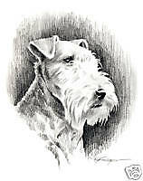 LAKELAND TERRIER Drawing Dog ART 13 X 17 Signed DJR