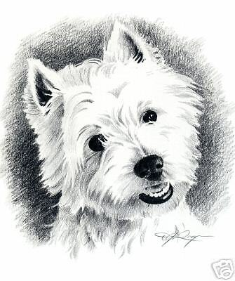 WEST HIGHLAND TERRIER Dog Drawing ART 13 X 17 LARGE DJR