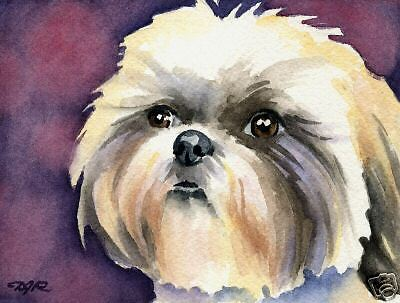SHIH TZU Dog Watercolor ART 13 X 17 LARGE Signed DJR