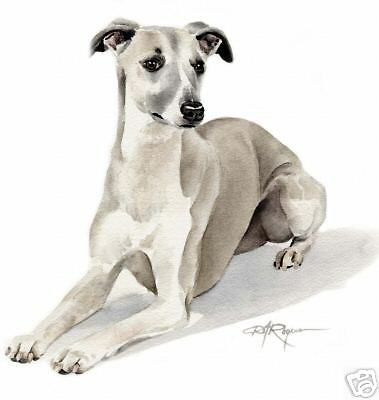 WHIPPET Dog Watercolor ART 11 X 14 Print signed DJR