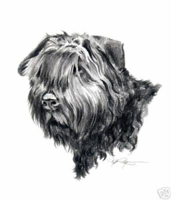 BOUVIER DES FLANDRES ART Print Dog Pencil Drawing 8 x 10 Signed by Artist DJR