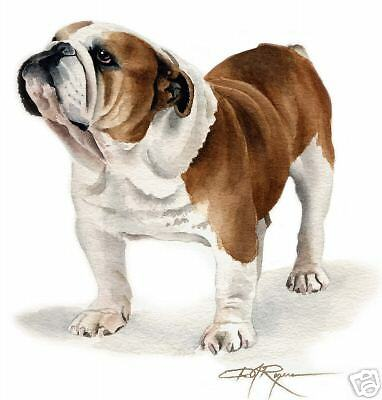 BULLDOG Dog Painting ART 11 X 14 LARGE Print by Artist DJR