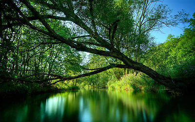 Green River Canvas Print 20*30 Inch HUGE !