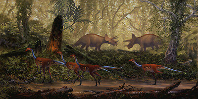 Struthiomimus and Triceratops, late Cretaceous Montana