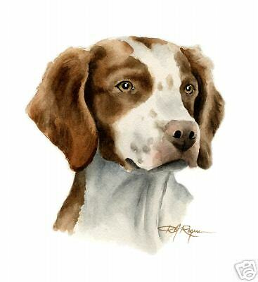 BRITTANY ART Print Watercolor DOG Painting 8 x 10 Signed by Artist DJR w/COA