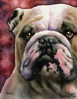 BULLDOG Watercolor Painting Dog 8 x 10 Bulldog Art Print Signed by Artist DJR