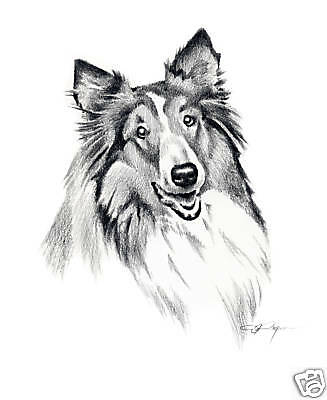 COLLIE ART Print 8 x 10 Pencil Drawing Signed by Artist DJR w/COA