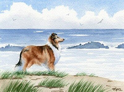 ROUGH COLLIE Beach DOG Watercolor 11 x 14 Art Print Signed DJR