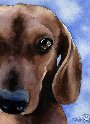 DACHSHUND Painting Watercolor 8 x 10 ART Print Signed DJR