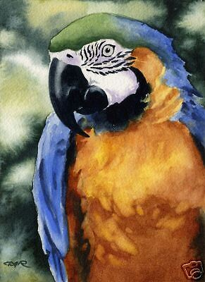 MACAW BLUE AND GOLD Watercolor 8 x 10 Art Print Signed Artist DJR