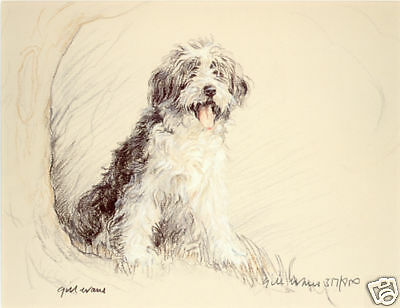 BEARDED COLLIE BEARDIE SHEEP DOG LIMITED EDITION PRINT - by Gill Evans