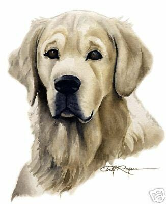 GOLDEN RETRIEVER ART Print DOG Watercolor Painting 8 x 10 Signed by Artist DJR