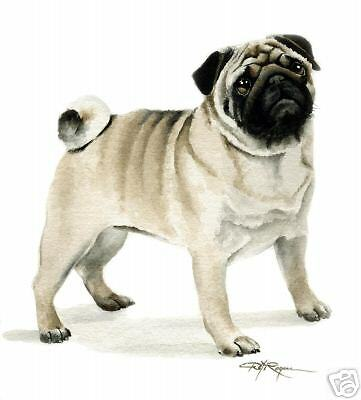 PUG Dog Watercolor Painting 8 x 10 ART Print Signed by Artist DJR
