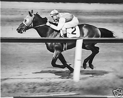 Seabiscuit Vintage Horse Racing 8X10 Photo Very Rare